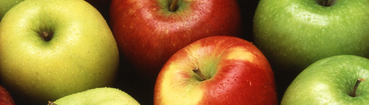 Apple Picking Orchard Directory