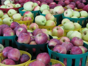 close up on apples at Mason Farms in gr containers Wayne County