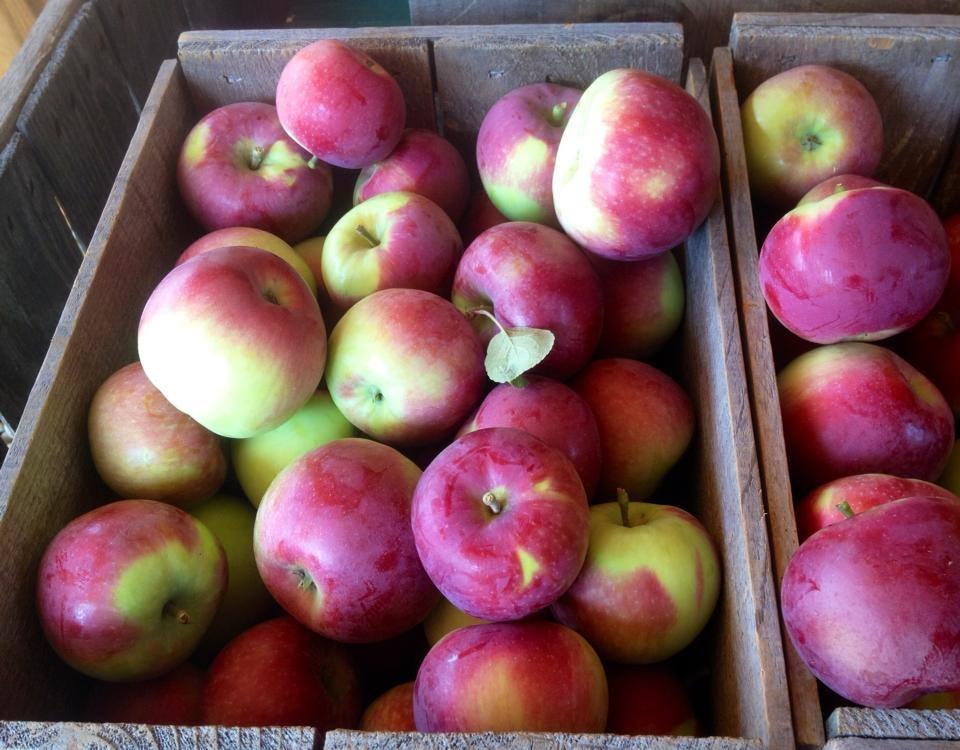 McLeod Orchard
